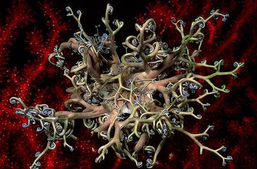 Gorgonocéphale-resized