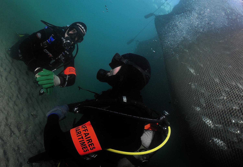 PAMM-plongeur-reglementation