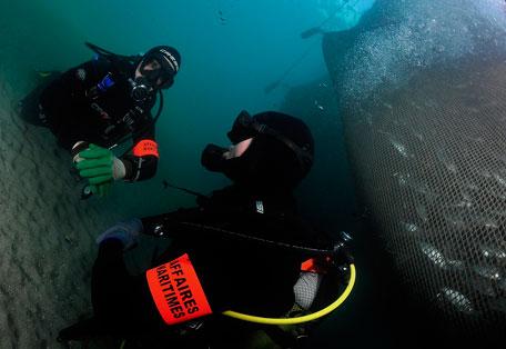 PAMM-Plongeur-reglementation-resized