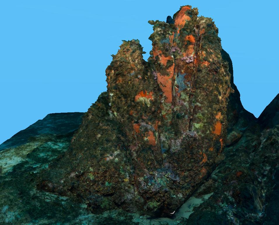 Model-recif-coralligène2