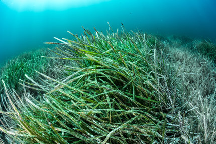 categorie-herbiers-article