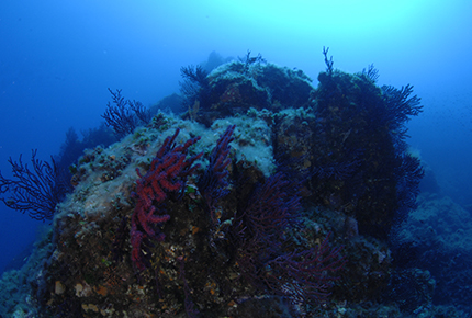 categorie-coralligène-article
