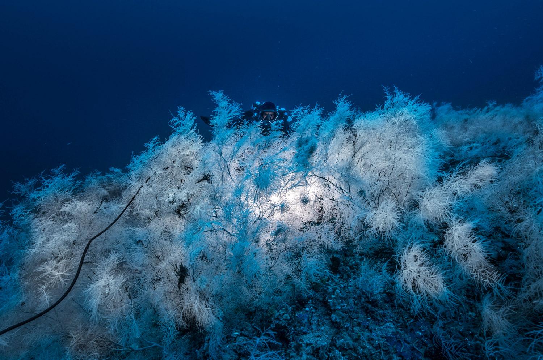 corail-noir-1